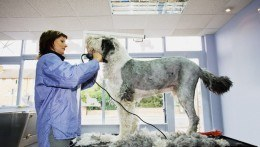 Local Mobile Pet Grooming services Falkirk and Stirling